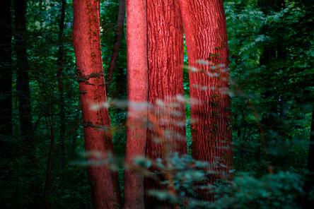 gr.m.trees.jpg