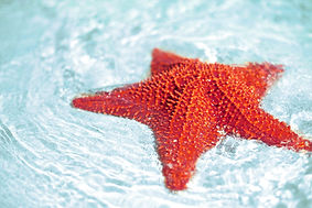 beautiful-colorful-bright-red-starfish-i