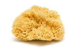 natural-bath-sponge-isolated-white.jpg