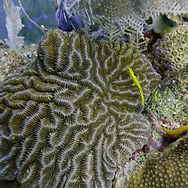 underwater-view-sponge-reef-wall-utila-b