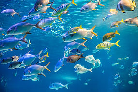 school-sea-fish-are-swimming-water-surfa