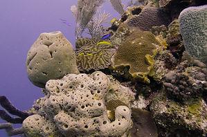 underwater-view-sponge-with-coral-reef-u