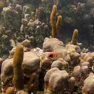 underwater-view-sponge-coral-wall-utila-