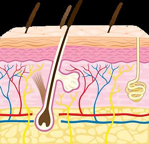 capes de la pell.png