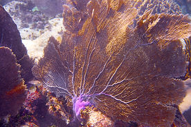 mesoamerican-barrier-great-mayan-reef.jp