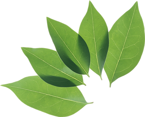 green_leaves_PNG3645.png