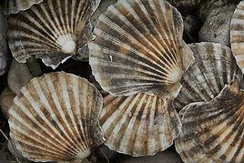 shell-4530218_1920.jpg