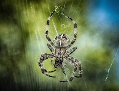 spider-1646340_1920.jpg