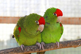 couple-green-parrot.jpg