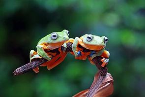 flying-frog-branch.jpg