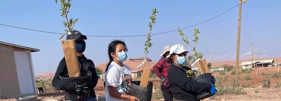 Apple tree planting