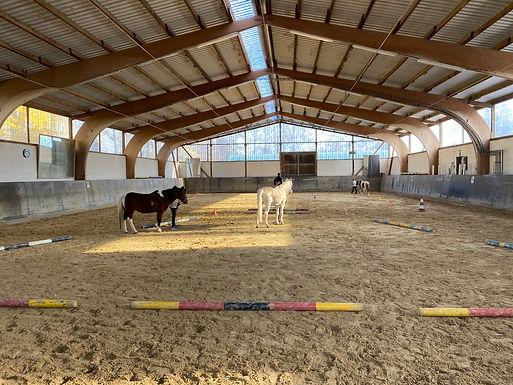 Pferdeführerschein-Prüfung