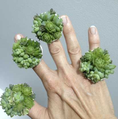 So Succulent Ring Large - $35