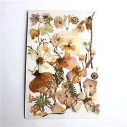 pressedflowers22_edited.jpg
