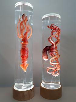 poulpe & calamar