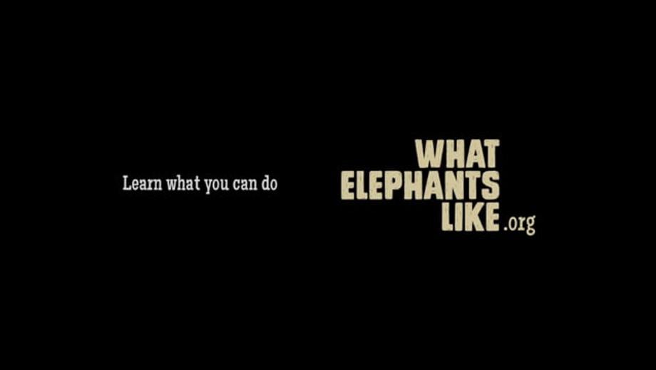 What Elephants Like Promo