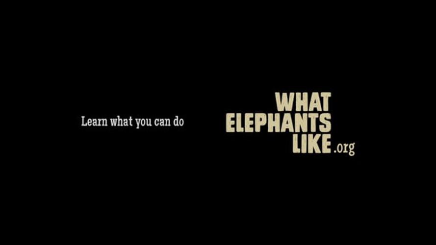 What Elephants Like - Video, Digital, Print