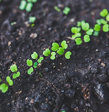 home-gardening-young-rucola-top-view-642