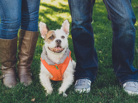 How to Include your Fur Babies in your engagement session