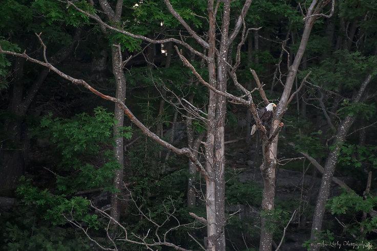 Surveyor of the Pine Tree State.jpg