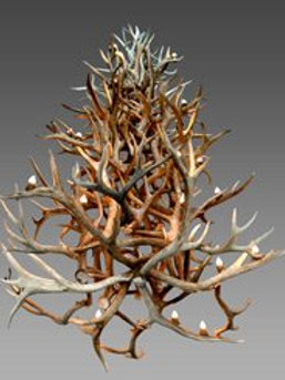 Real Antler Elk / Mule Deer / Whitetail 4-Tier Chandelier Light