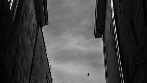 Bird Corridor