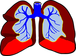 lungs-296392_1280.png