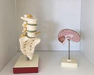 Neurologie Aarau Maire