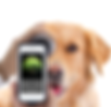 dog phone.png