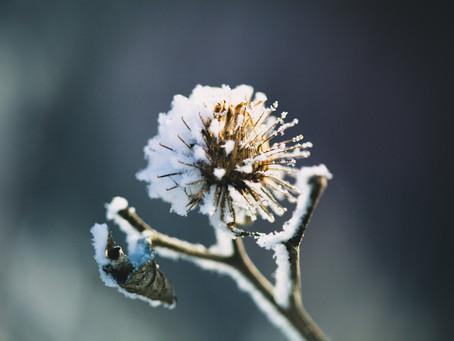 Wintering Your Garden