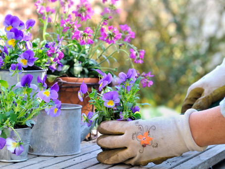 10 Things I Wish I Knew Before I Started A Garden