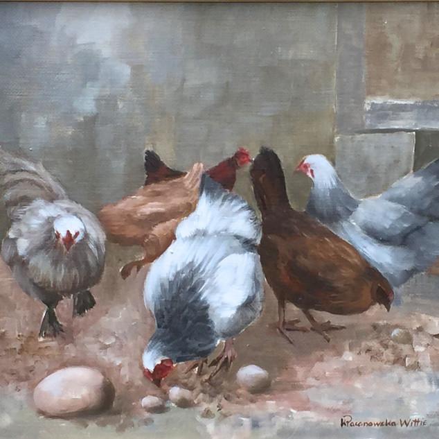 Barnyard Chickens II 16x20.jpg