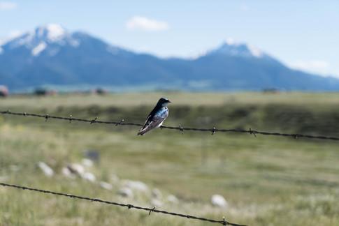 Montana-145.jpg