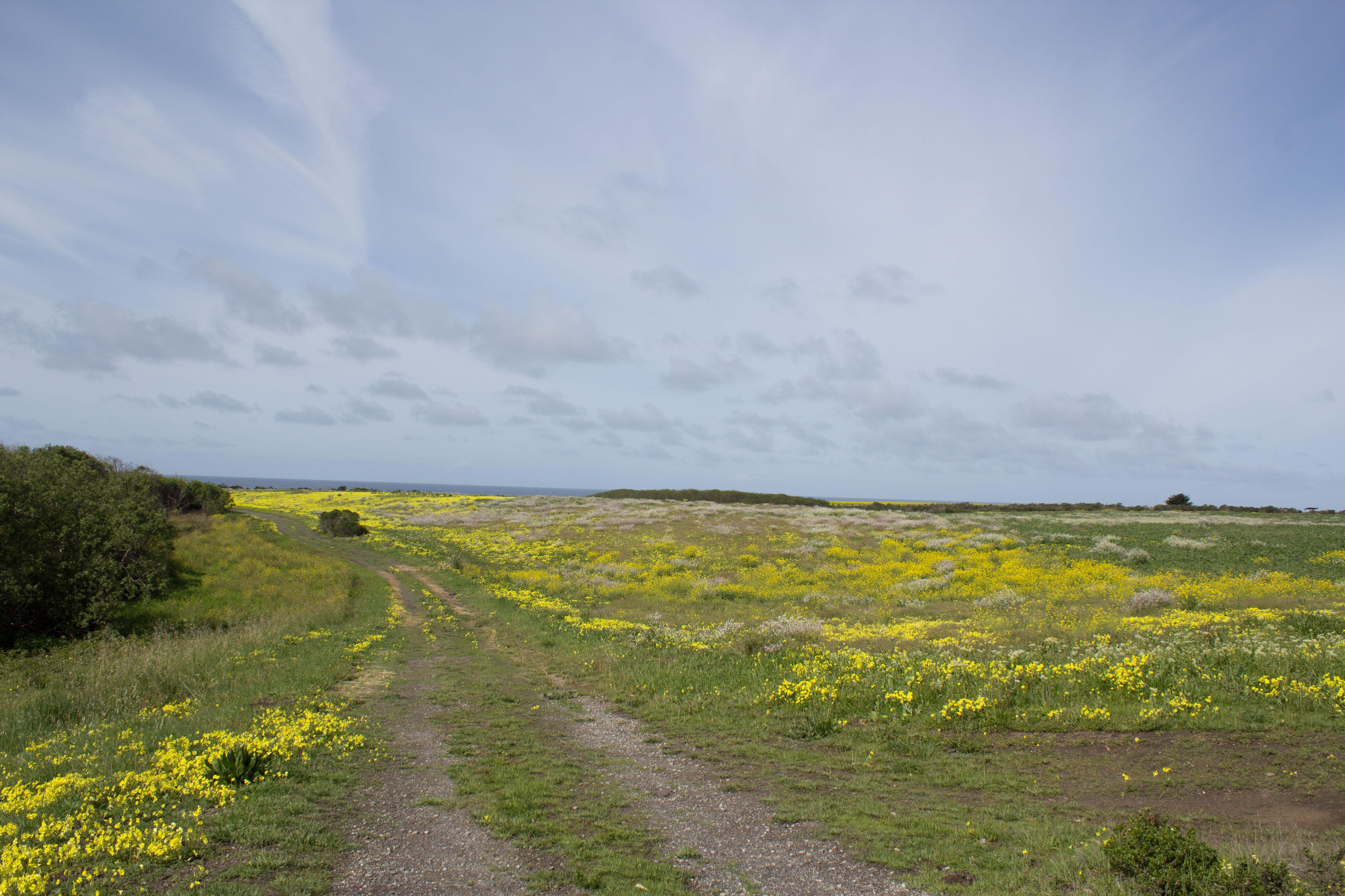 wildflowers_sml.jpg