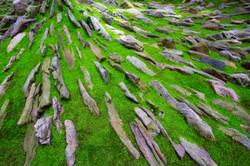 Thrust! garden moss and stones