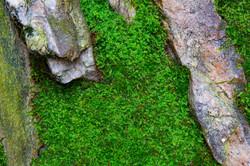 Thrust! garden moss