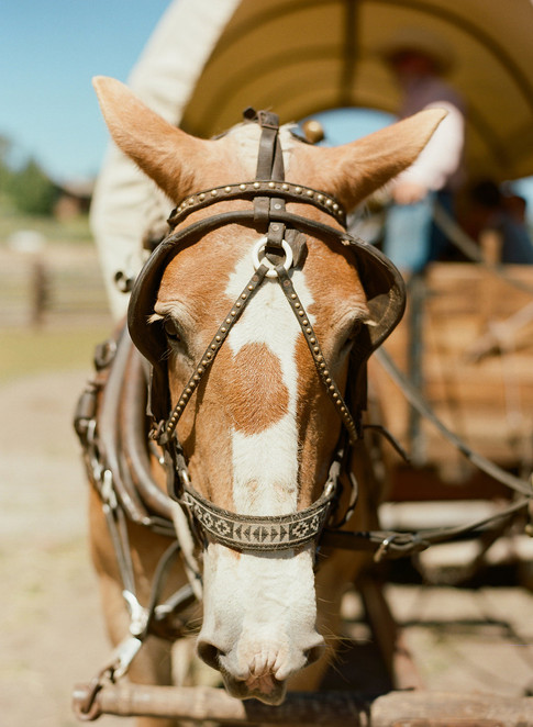 Brown Horse with White Nose Pulling Wagon