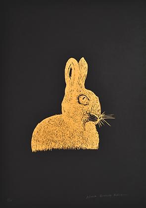 Alfonso Barrera // Conejo Dorado