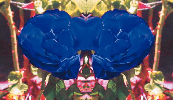 George Mead Moore // BLUE ROSE