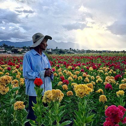 Ana Paula Fuentes // Flores día de Muertos
