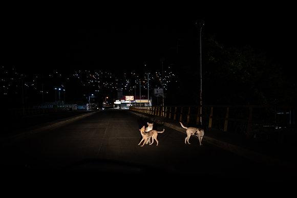 Jalil Olmedo // Las sombras Bailan