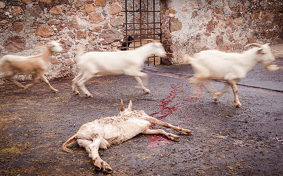 Anilú Quintero // De la serie La matanza