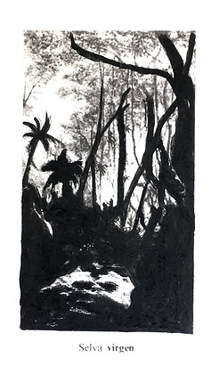 Julio Barrita // Nueva Naturaleza, Selva Virgen