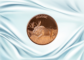 moose front 2.png