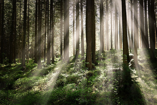 beautiful-shot-of-forest-with-tall-trees