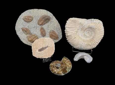 22 fossils.png