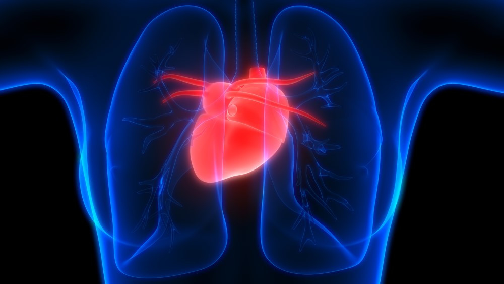 Smoking is dangerous for heart & lung function