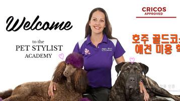 호주 골드코스트 애견 미용학교 Pet Stylist Academy