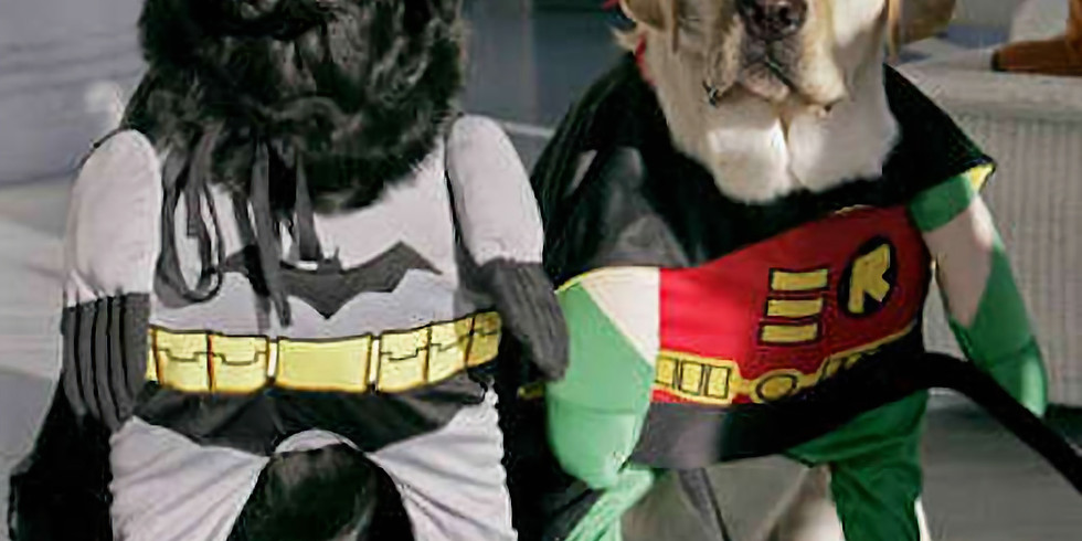 New Year's Doggie Costume Contest!