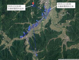 GPS情報 J0097♂・J0015♀ 2019.1.2.18:00~2019.1.9.16:00